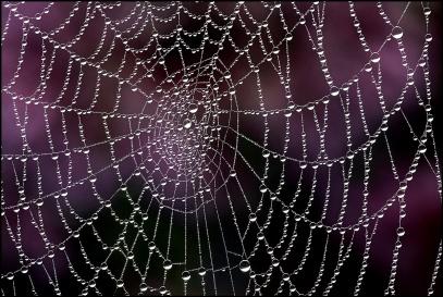 tela-di-ragno